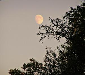 moon  6-16-16